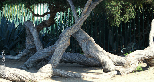 twisted tree trunk , living  sculpture