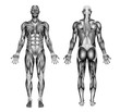 male muscles - pencil drawing style - 3d render