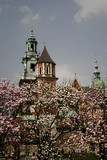 wawel cathedral in flowers poster