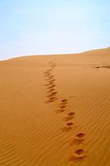 liwa desert 11
