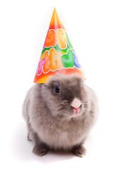 """bunny in a """"happy birthday"""" cap"""