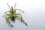 tropical rainforest spider poster
