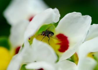 fly in flower