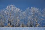 arbres gelés poster
