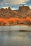 desert pond 5 poster