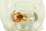 crab in aquarium poster