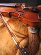violin and the fur coat
