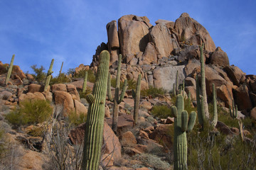 desert scenic with big boulder