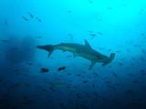 Fototapete Galapagos - Meer - Fische