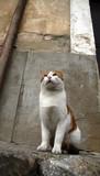 gato 3 poster