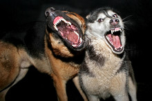 Kto się boi złego wilka