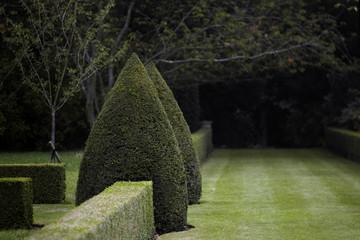 dark topiary garden