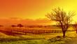 vineyard landscape sunset