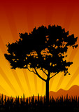 amazing natural sunset landscape with tree silhouette, vector il poster