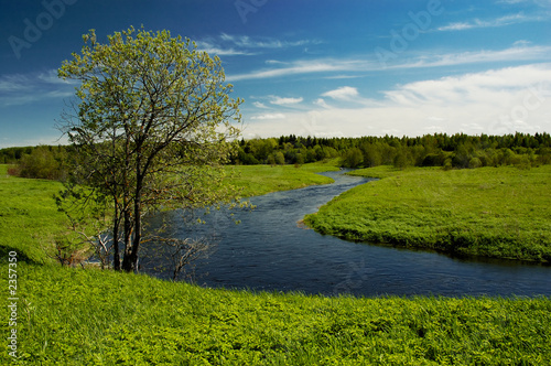 tree on river - 2357350