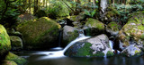 rainforest river panorama poster