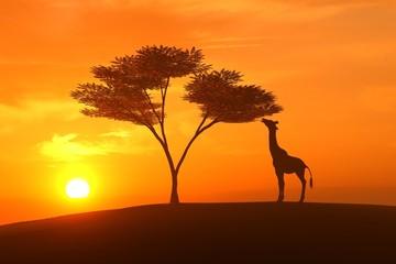 giraffe asunset