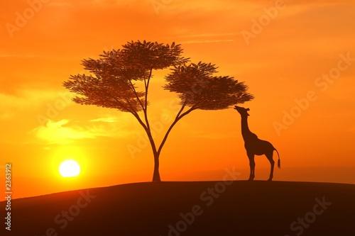Leinwanddruck Bild giraffe asunset
