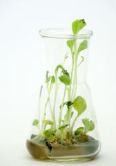 lab experiment plant