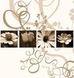 flowers-