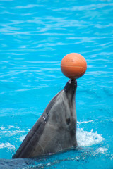 playing dolphin