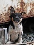 the alert homeless puppy. poster