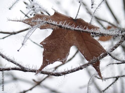 icy twig