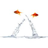 Fototapete Aqua - Bewegung - Fische