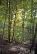 woods at bear mountain
