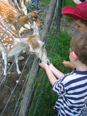 two boys feed an animal