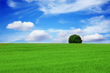 lonely tree in a beautiful landscape poster