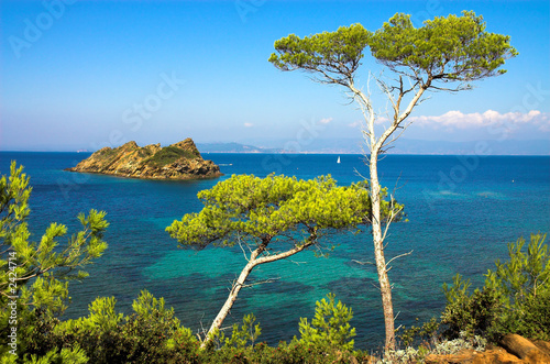landscape with pines on the island of the cote d'azure