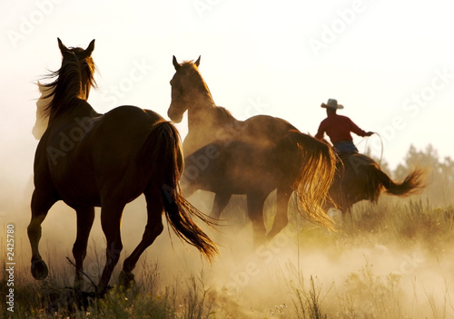 canvas print picture wrangler herding wild horses