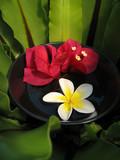 aromatherapy bowl poster
