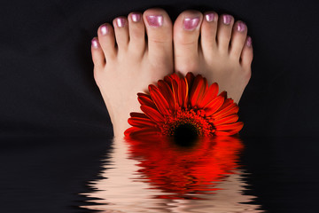 woman foot with red gerbera