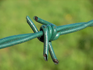 green barbed-wire