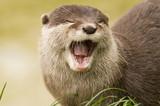 eurasian river otter poster