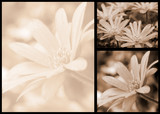 sepia floral postcard collage poster