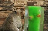 monkey treat poster
