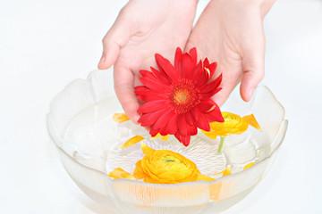 flowers wellness