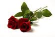 zwei rote Rosen auf weissem Hintergrund