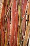 colourful bark