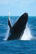 granville whale 1