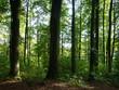 bäume in wald