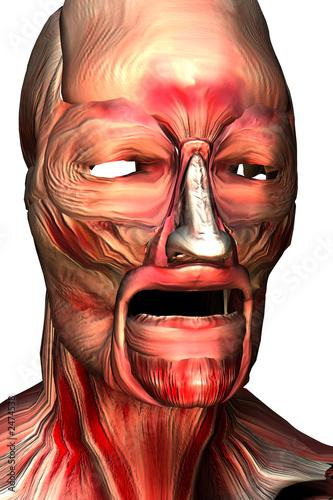 los musculos de la cara