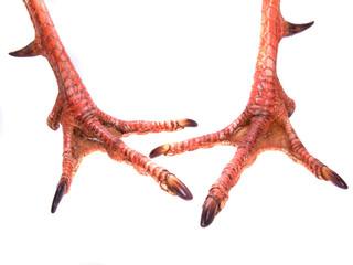 pair of gobbler feet