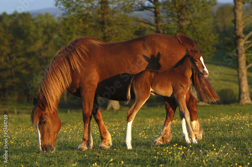 mare and his foal