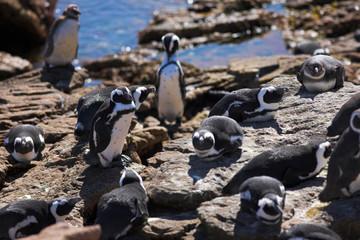 jackass penguin #9