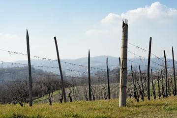 vignes piémont