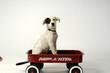 roleta: puppy in wagon